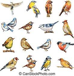 birds., pintura aquarela, cobrança