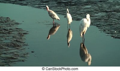 Birds preening in the shallow water