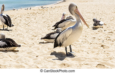 Birds resting on the beach