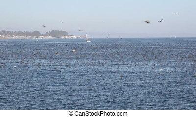 Birds - SANTA CRUZ, CA, USA - SEPTEMBER 5: Thousands of...