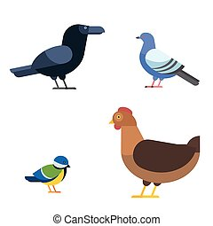 Birds set illustration isolated