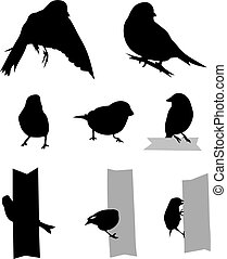Birds Silhouette - Vector Set of 8 Greenfinch silhouettes