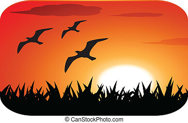 birds silhouette with sunset
