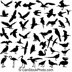 birds silhouettes - Big collection of birds - vector