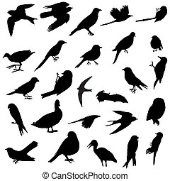 Birds silhouettes - 26 silhouettes of several birds races