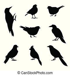 birds., silhouettes, ensemble, hiver