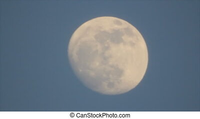 Birds silhouettes on moon disk - Silhouette black bird on...