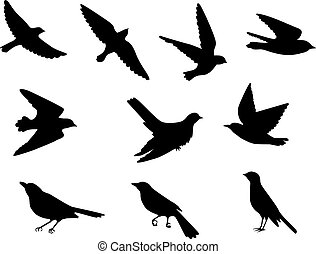 birds silhouettes set