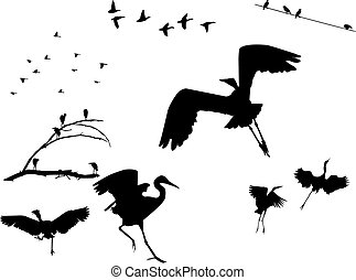 Birds Silhouettes - Several flock of birds silhouettes,...