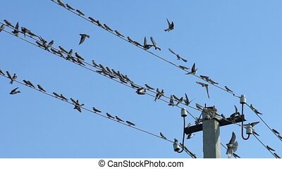 Birds sit on wires and fly away, Slow Motion - The birds sit...