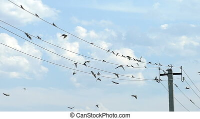 Birds sit on wires and fly away