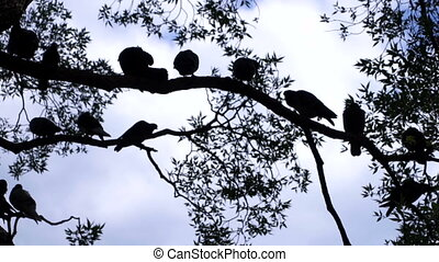 Birds sitting on a tree in the park