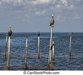 Birds sitting on old dock posts