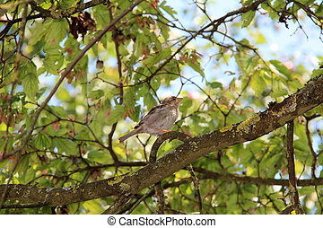 Sparrow sitting on a tree