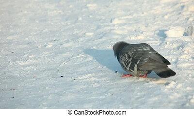 Birds. - Birds on the snow.