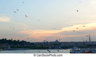 Birds sunset sky gull - Hundreds of birds on a background...