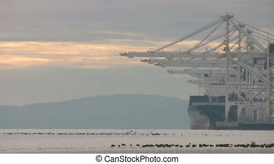 Birds Take Flight At The Port