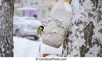 birds titmouse eat from feeders in the winter in the snowfall