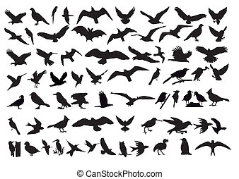 As a variety of vector silhouettes of birds