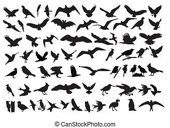 Birds vector - As a variety of vector silhouettes of birds