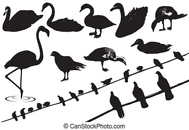 Birds. Vector black silhouettes of wild birds on white