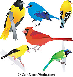 birds., vector, eps10, verzameling