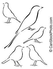 Birds Vector Illustrations