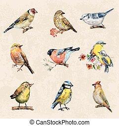 birds., vendange, tableau aquarelle, collection