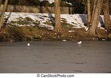 Birds which fly over the ice-cold lake