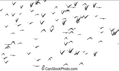 birds white background