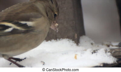 Birds winter feeder