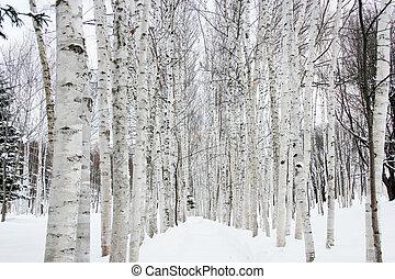 birk træ, og, sne