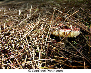 Birth of a fungus