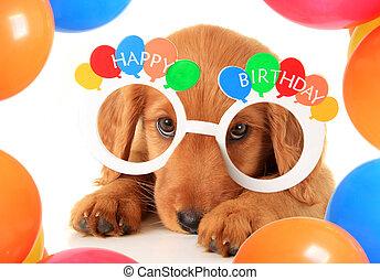 birthday, 子犬, 幸せ