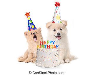 birthday, 子犬, 歌, 幸せ, 歌うこと, ケーキ