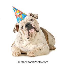birthday, 犬