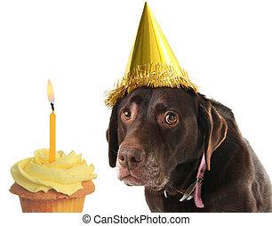 Birthday dog and cupcake