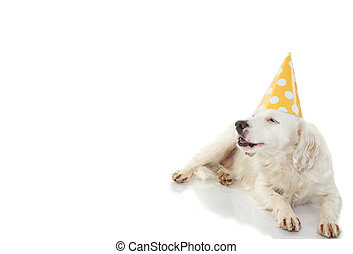 BIRTHDAY DOG BANNER. FUNNY TERRIER PUPPY WEARING A YELLOW POLKA DOT PARTY HAT. ISOLATED AGAINST WHITE BACKGROUND.