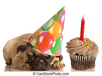 birthday dog - cute pug puppy wearing birthday hat and...