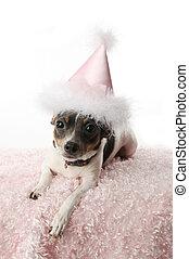 Birthday girl doggy