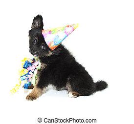 Birthday Pomeranian Puppy