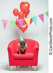 Birthday pug dog on a festive background. - Fawn pug dog...