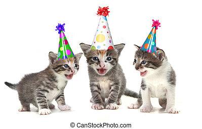 Birthday Song Singing Kittens on White Background