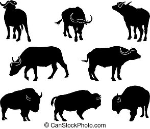 Bison and Buffalo - african and american buffalo eight black...