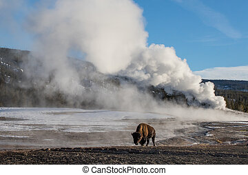 bison and giant geyser