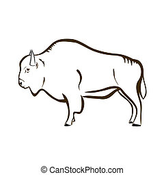 Bison (buffalo) - Vector illustration : Bison on a white...