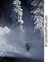 Bison in Mist