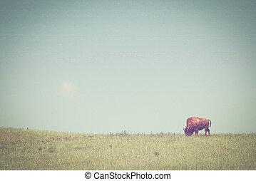 Bison on a green meadow