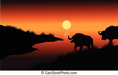 Bison silhouette in riverbank