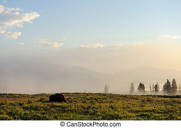 Bison Silhoutte at Dawn